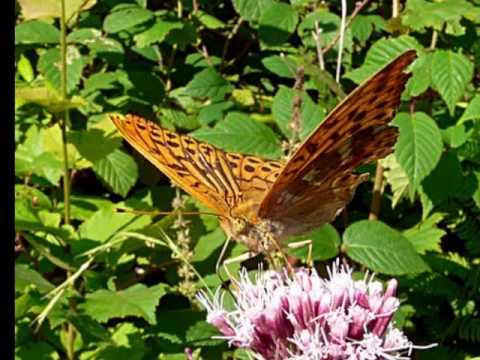 richard-clayderman-woman-in-love-metulji-jana-tomc