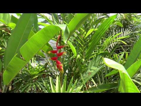 Thailand Phuket Butterfly Garden