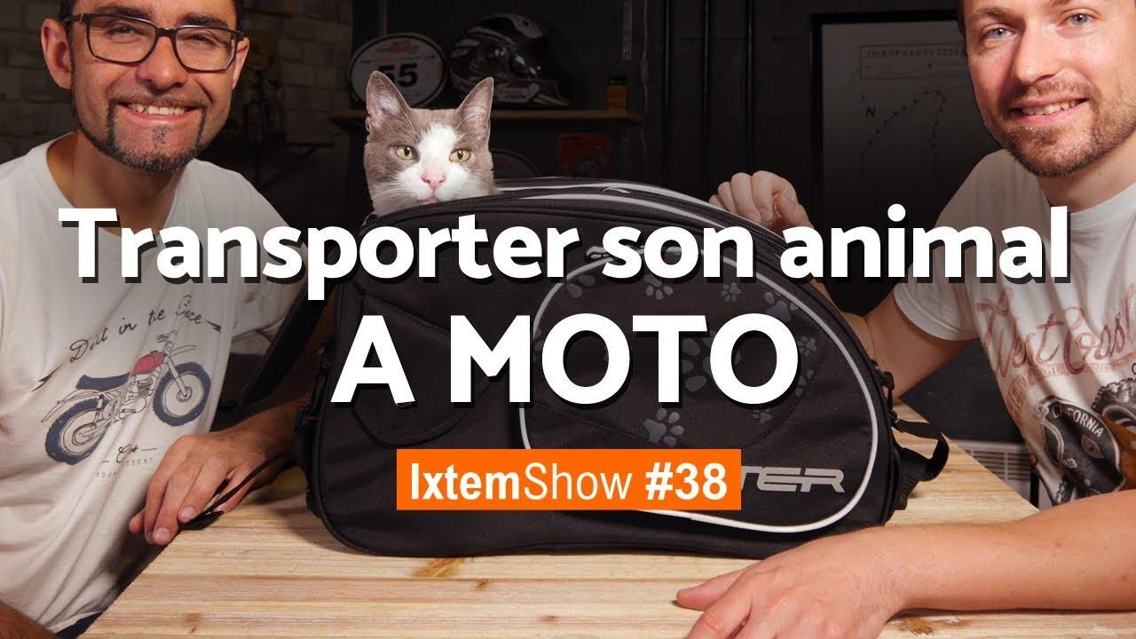 Saddlemen Pet Voyager sacoche moto pour transport de chien