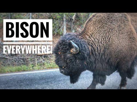 Exploring Yellowstone National Park