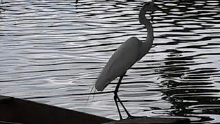 Minha experiência no lagoão do Rio Gandu vendo as mães deixarem seus monstrinhos navergar lá no meio