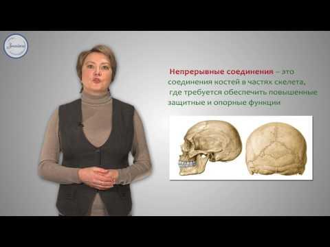 Видеоурок скелет строение состав и соединение костей