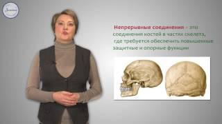 Биология 8 класс. Скелет. Строение, состав и соединения костей