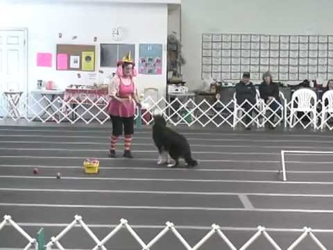 Canine Freestyle Clown Routine