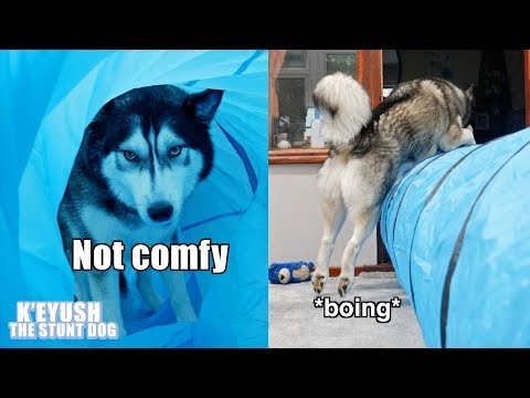 My Dog Uses A Tunnel In All The Wrong Ways! Exercise Fail!