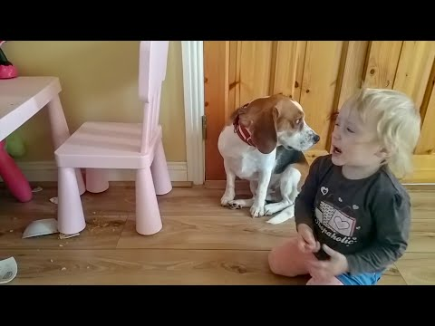 Guilty dog got hugs from little girl after he broke her bowl  | Charlie the dog and Baby Laura