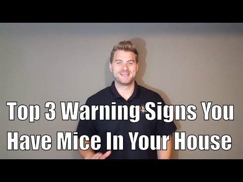Top 3 Warning Signs You Have Mice In Your House