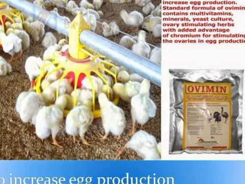 poultry feed additives manufacturer +919999693322