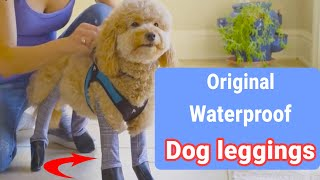 How to use/ put on Walkee Paws dog leggings.