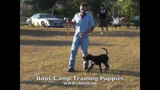 Pitbull Lab Mix Puppy Training,your Puppy Training Guide