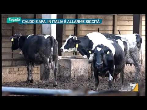 Caldo e afa, in Italia è allarme siccità