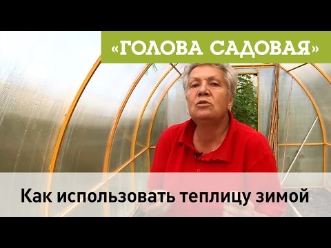 Голова садовая - Как использовать теплицу зимой
