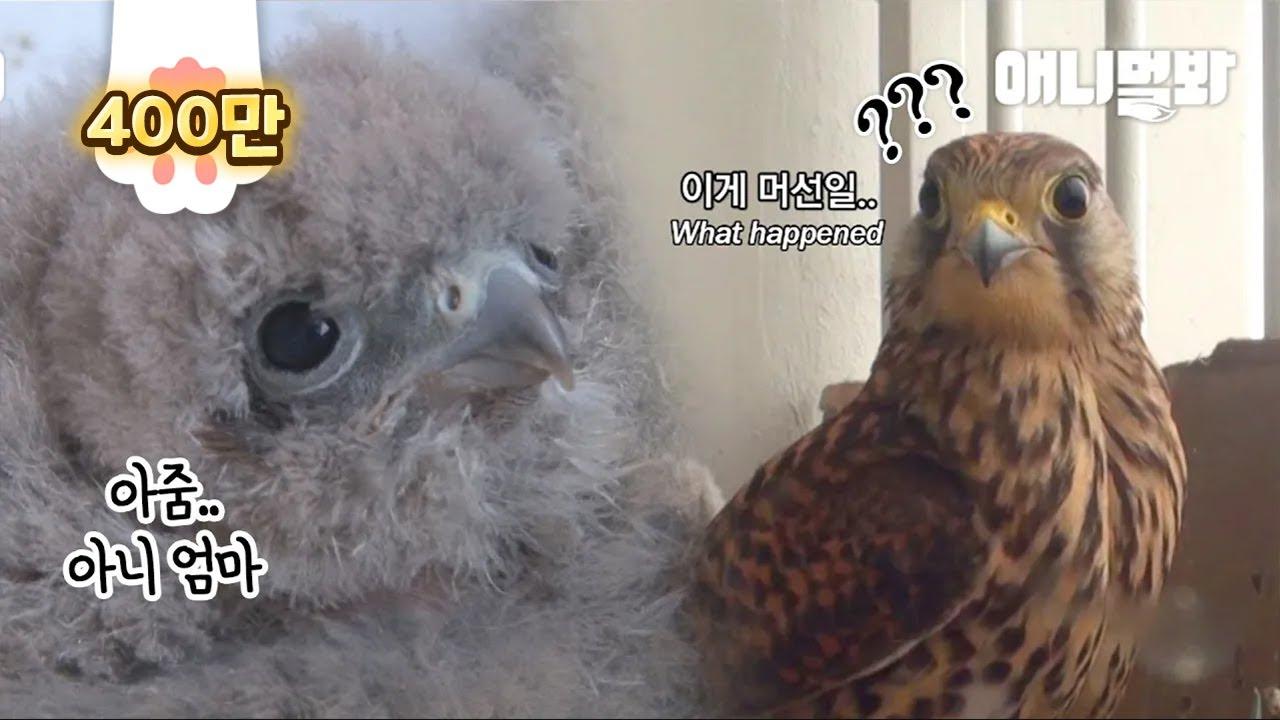 둥지에 모르는 새끼가 있는 걸 본 어미새 반응ㅋㅋ ㅣ Mother Bird's Reaction After Finding A Random Chick In Her Nest