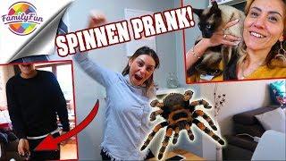 MEGA SPINNEN PRANK RACHE😣 - EDAS Katzen Phobie - Family Fun