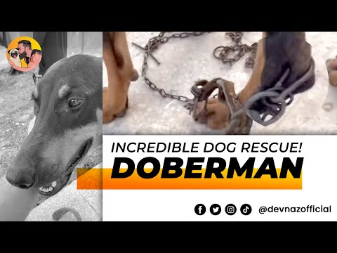 INCREDIBLE DOG RESCUE ! DOBERMAN IN A 1 IN A MILLION SITUATION !!!