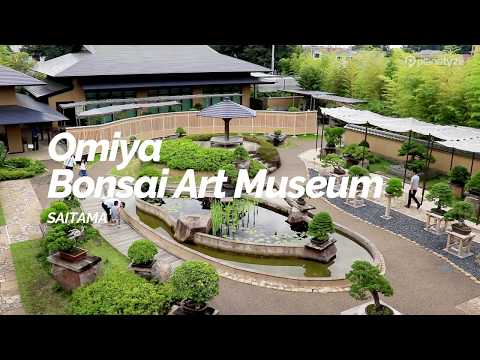 Omiya Bonsai Art Museum, Saitama | Japan Travel Guide