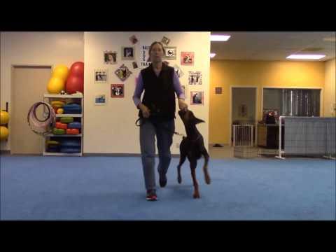 Training Tips - Perfecting Heeling - BeaBeas Dog Training
