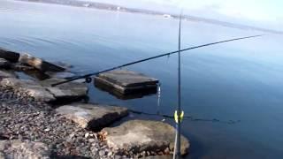 Рыбалка в Старом Салтове 2019 База Соича Весело провели время