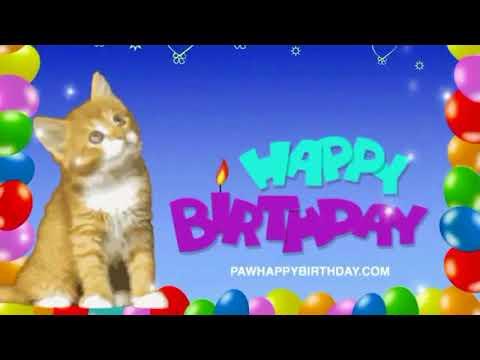 Cats Singing Happy Birthday