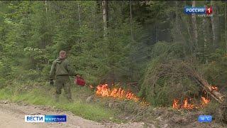 Ситуацию с лесным пожаром в Пряжинском районе возле поселка Кудама удалось переломить