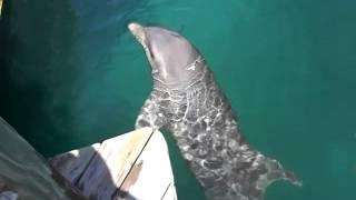 Delfine-Dolphins