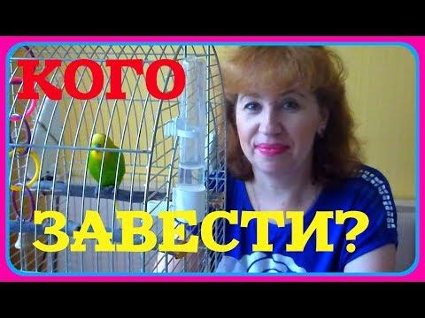 Вопрос: Какое животное лучше завести как друга для большого попугая?