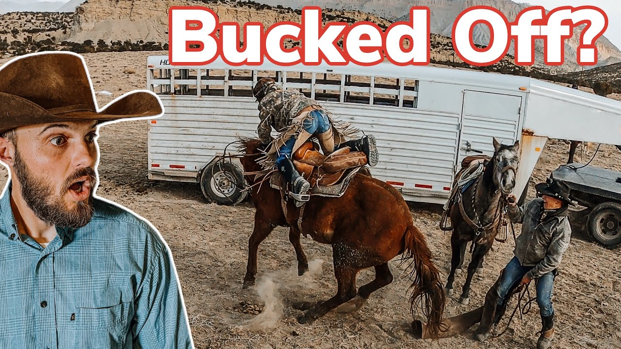Cow Head-Butts My Mule, on Cattle Drive! Vlog#: 37