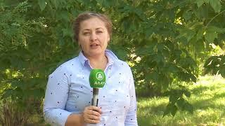 в Костанае мамы не могут получить бесплатные смеси для кормления грудничков