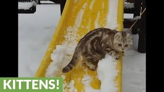 Unique cat loves to go down the slide