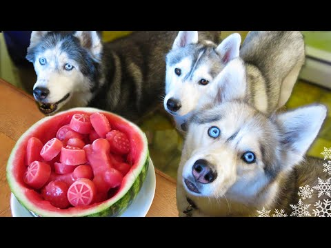 Thumbnail: WATERMELON DOG TREAT How to make Frozen DIY Dog Treats | Snacks with the Snow Dogs 34