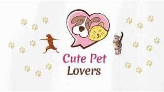 Cats and Dogs Funny Video Compilation 2018 - 2019 HD    Cute Pet Lovers