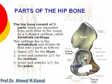 Hip bone Parts - YouTube