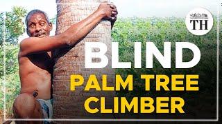 Blind palm tree climber inspires many