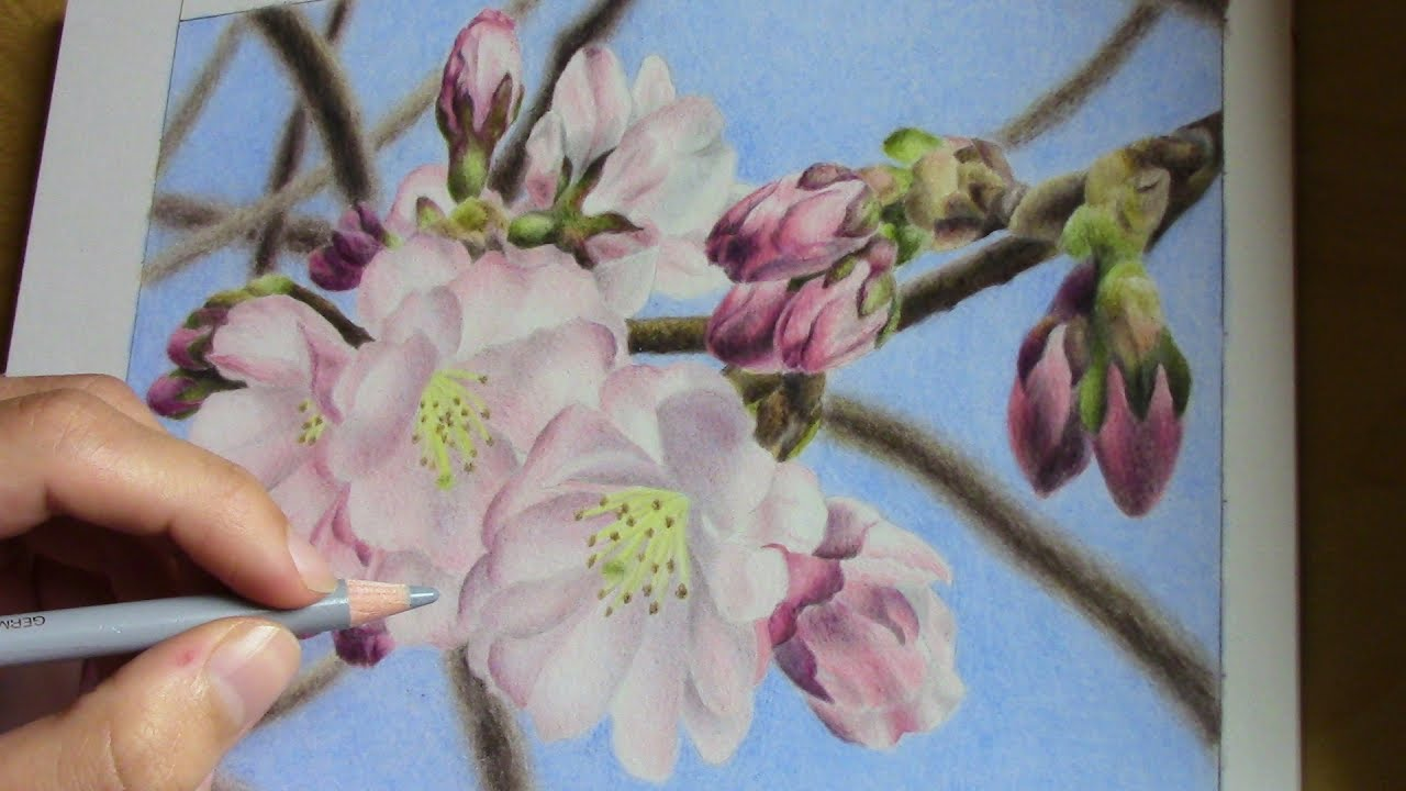 Drawing cherry blossoms with colored pencils