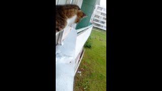 видео приколы про кошек