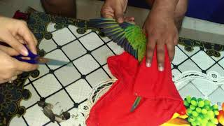 How to clip sun conure wings