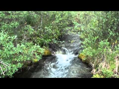 Canmore Creek Fish Habitat; V-Weirs And Deflectors .mp4