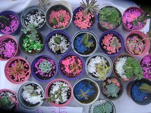 Trasplante de Cactus y Suculentas - Cactulocura - Youtube