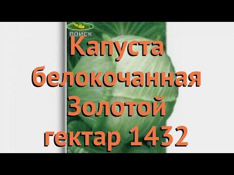 Капуста белокочанная Золотой гектар 1432 🌿 обзор: как сажать, семена капусты Золотой гектар 1432