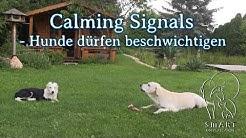 Hunde dürfen beschwichtigen!