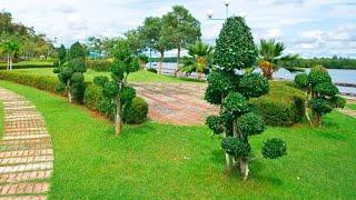 Arbustos para arte topiario Decogarden