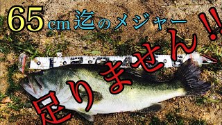 65cmオーバー出現‼︎灼熱のおかっぱり、サカマタシャッド乱獲劇‼︎【琵琶湖】