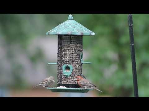 Stokes Select® Acorn Screen Bird Feeder