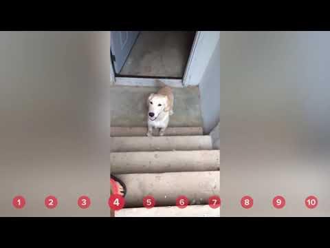 Cup Holder Cat Serenading Pups