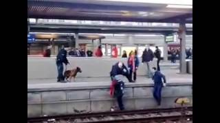 Kopie von Polizei Hund stößt Frau auf die Gleise am Nürnberger Hauptbahnhof  Police dog pushes woman