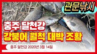 달천강 월척 대박조황  2020_03_14 [관문낚시]