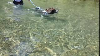 まこ2歳9ヶ月、初めての川遊び(^^)