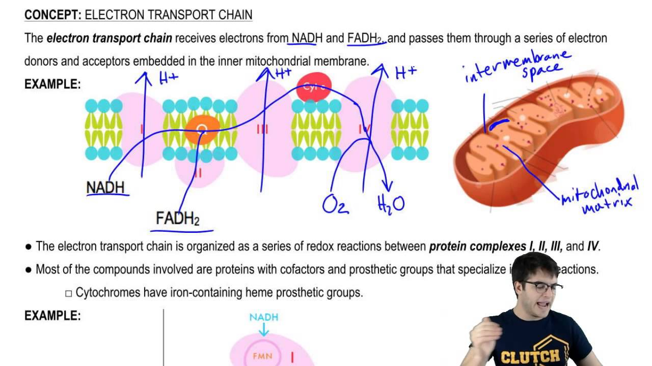 Electron Transport Chain And Redox