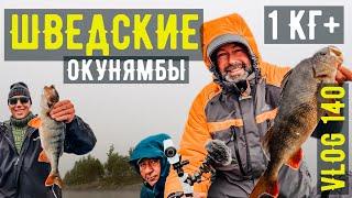 Рыбалка динамит Закилошные окуни вырывают снасти из рук Рыбалка на севере Швеции день первый