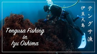 【Tengusa Fishing in Izu Oshima】Japanese Fisherman dive and catch seaweed |テングサ漁の様子伊豆大島 〜寒天、ところてんの原料〜
